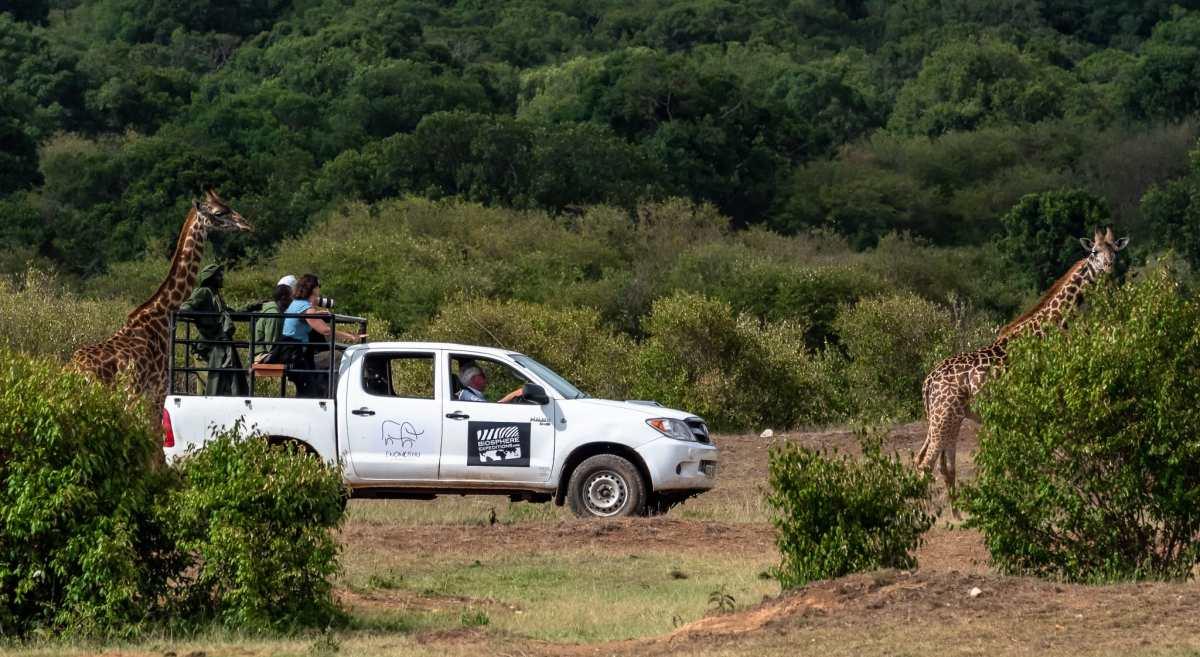 A Citizen Scientist in Kenya – My Wildlife Conservation Volunteer Travel Experience