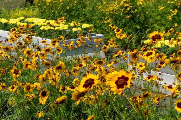 some of the flower beds at the Charles Georgeson botanical gardens