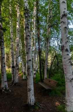 walking in Creamer's Field in Fairbanks