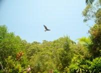 Currumbin Bird Sanctuary (42) (800x580)