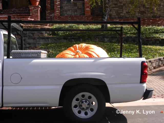 Big ole honkin' pumpkin!