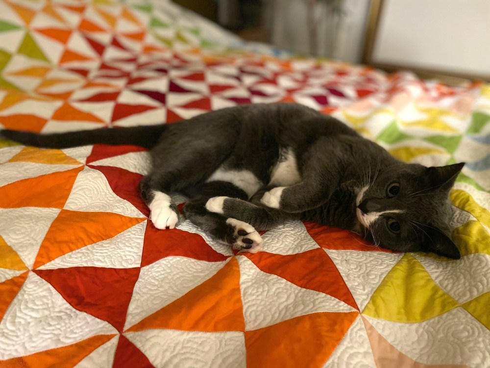 a black and white cat lying on a multicolored quilt