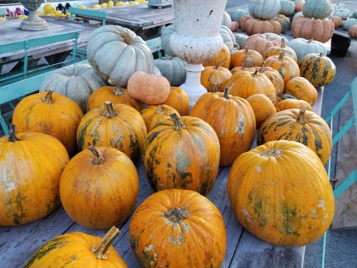 fall, indianapolis, pumpkins, locally grown gardens