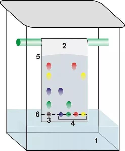 Cromatograma de pigmentos vegetales
