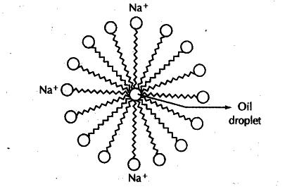 Estructura general de una micela de jabón de sodio, en el centro se observa una gota de aceite que es solubilizada por el accionar del jabón