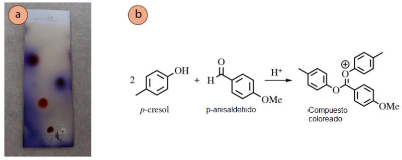 Figura 6: a) TLC de varios fenoles visualizados con la tinción de p-anisaldehído, b) Reacción propuesta de p-cresol (carril 2) con la tinción.