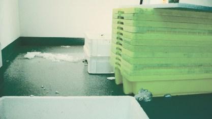 pescado congelado2