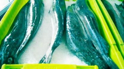 pescado congelado4