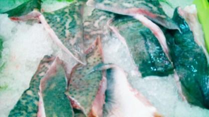 pescado congelado7