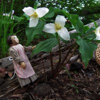 Spring Wildflowers 6