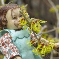 February Witch Hazel