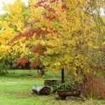 quinta dos tevos exterior estação de outono