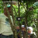 Agroflorestar Manejo de Agrofloresta de 5 anos