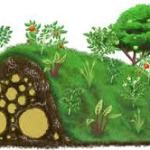 Hugelkultur – Técnica de Permacultura