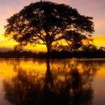 Classificação Ecológica Sucessional – Climax ou Transicional?