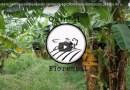 Canal no Youtube Agricultura Sintrópica e Agrofloresta
