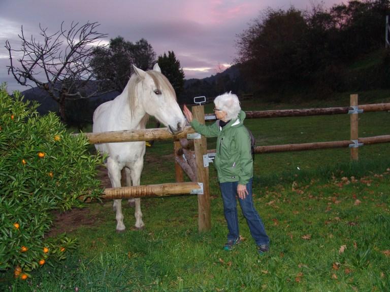 senhora e cavalo