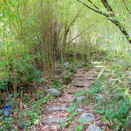 Bamboo garden . Jardim de Bamboo