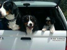 My Travelin' Trio.