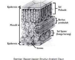 Pengertian Morfologi Tumbuhan Beserta Struktur dan Anatomi Lengkap