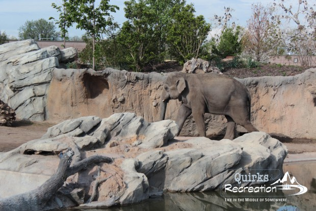 Denver Zoo - Bunk with the Beasts - Elephant
