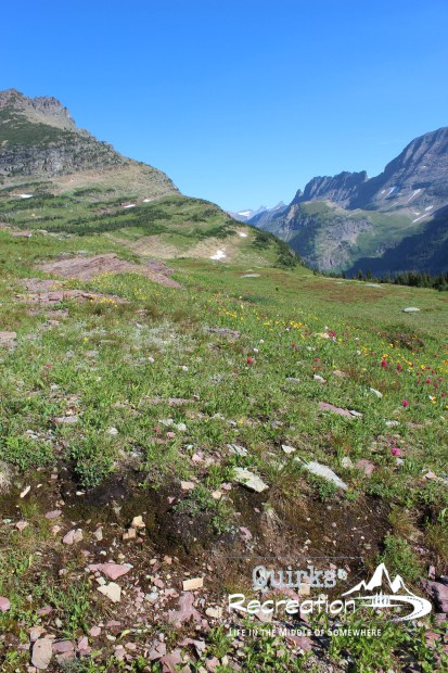 Meadow of wildflowers at Logan Pass - Glacier National Park