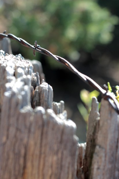 Barbed wire resting on a fence post