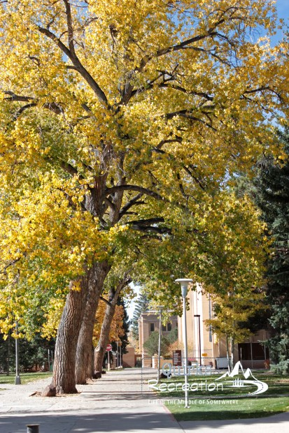 fall colors on the campus of University of Wyoming