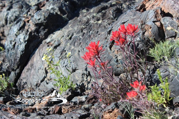 Indian Paintbrush at Craters of the Moon
