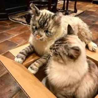 petsie cat plush toy