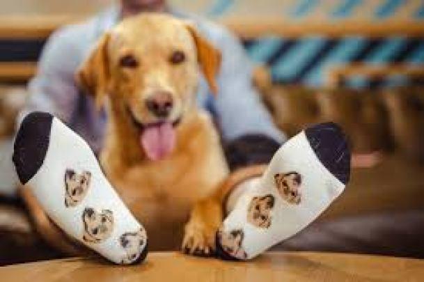 order lovimals socks with cat or dog