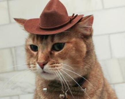 cats hats cowboy