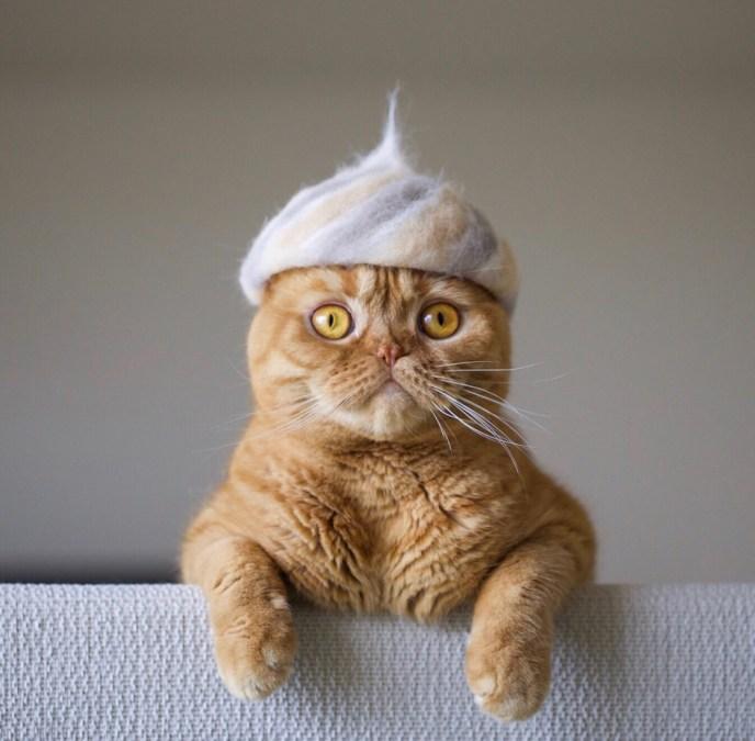 cats hats ryo