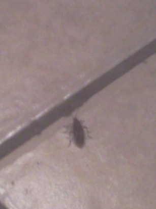 Death Bug in the Kitchen