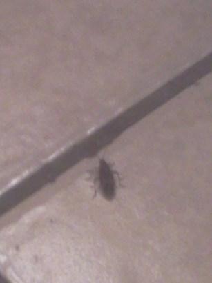 Death Bug in the Kitchen