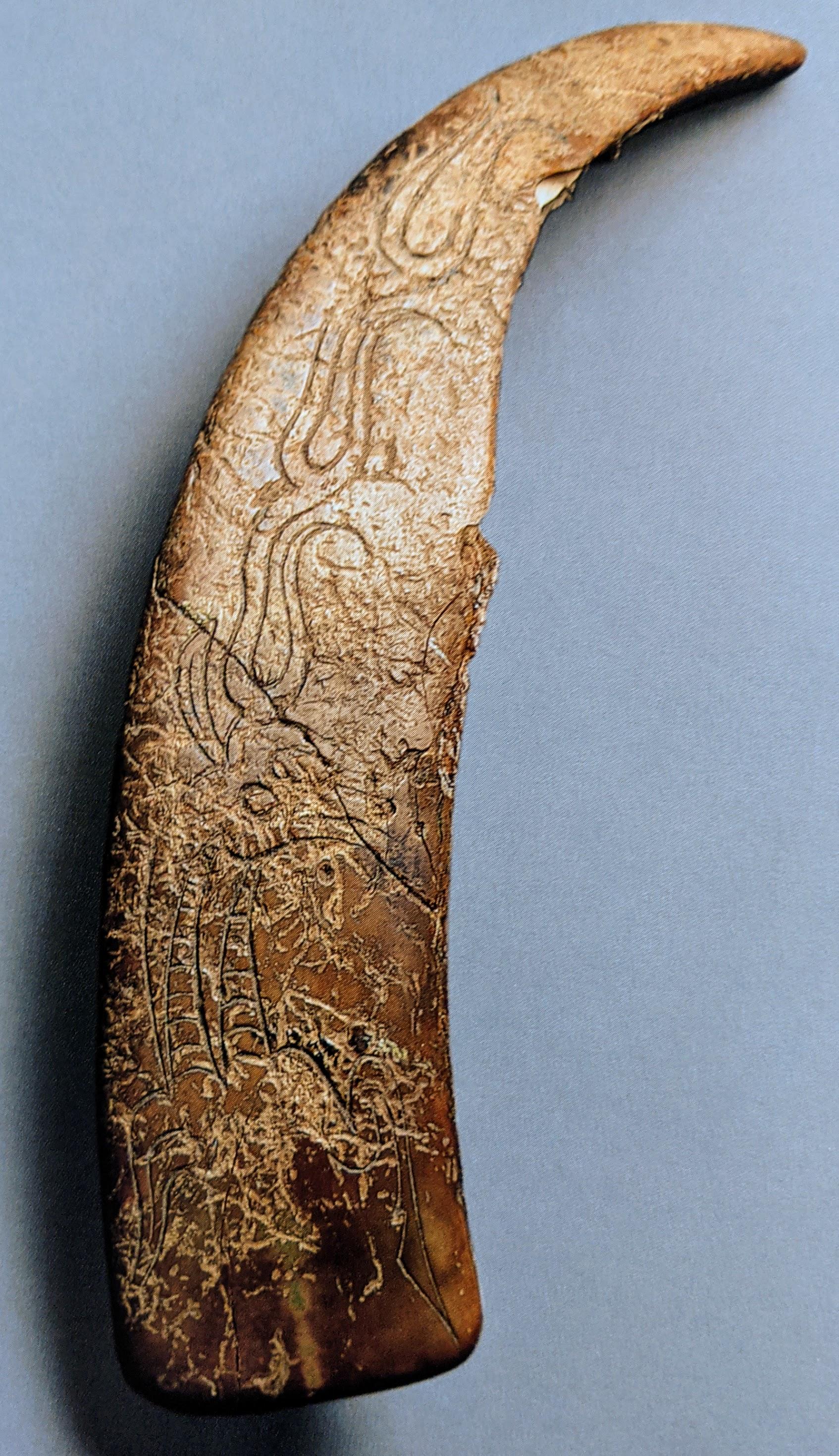 Boars tusk pendant