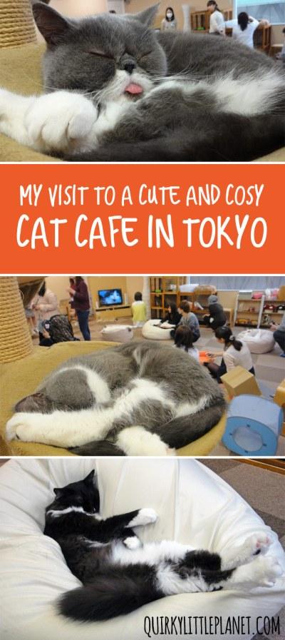 Cat Cafe Nekorobi Ikebukuro - cute and cosy cat cafe in Tokyo