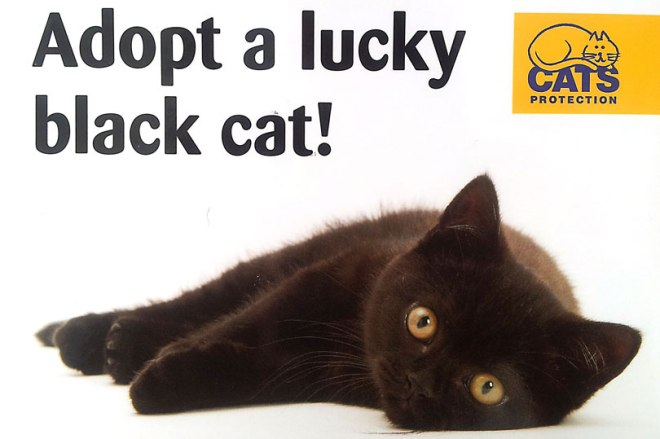 cats-protection-lucky-black-cat