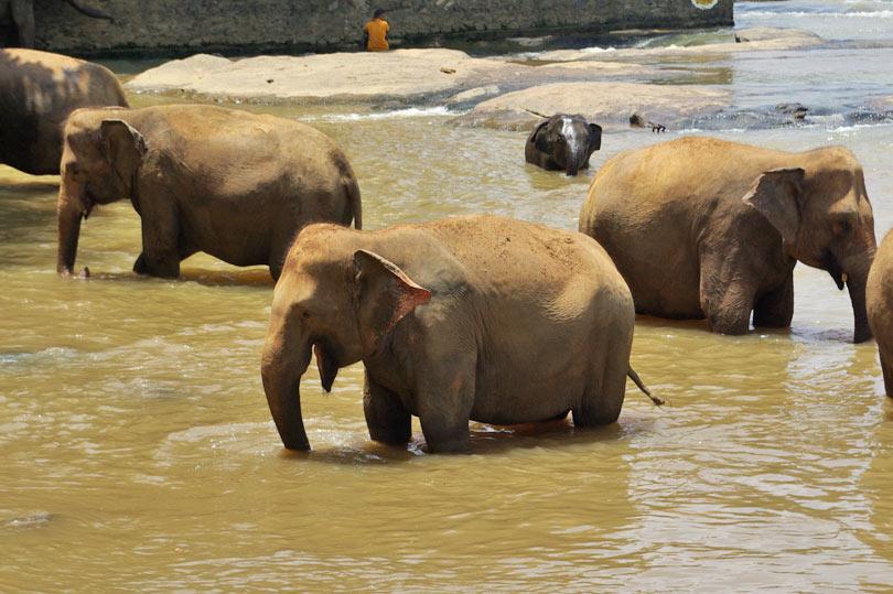 Happy looking elephant