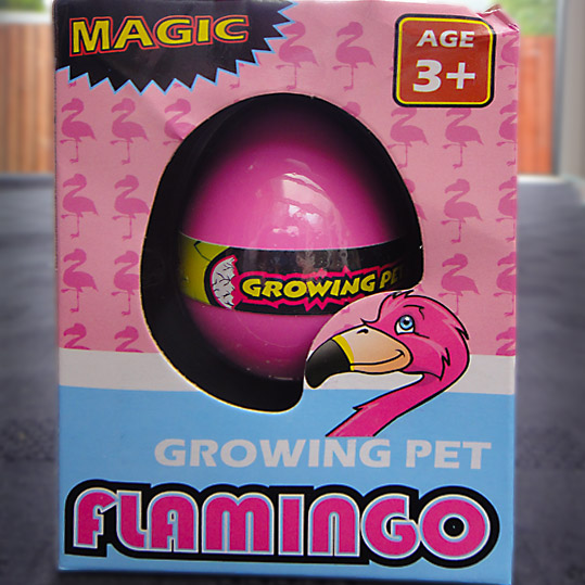 growing pet flamingo