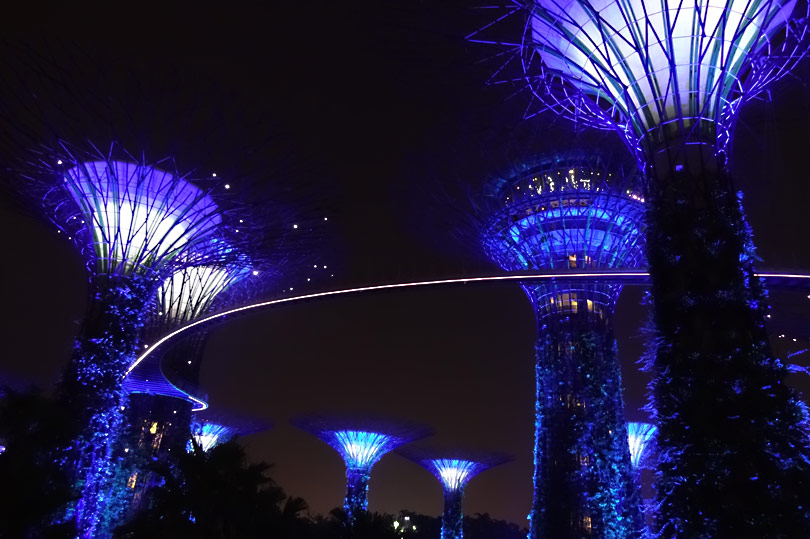 The Supertrees at Gardens by the Bay