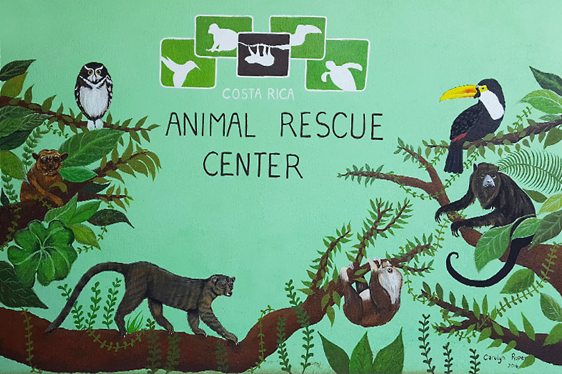 Volunteering in Costa Rica - spending a week at an animal rescue centre was a very rewarding experience.