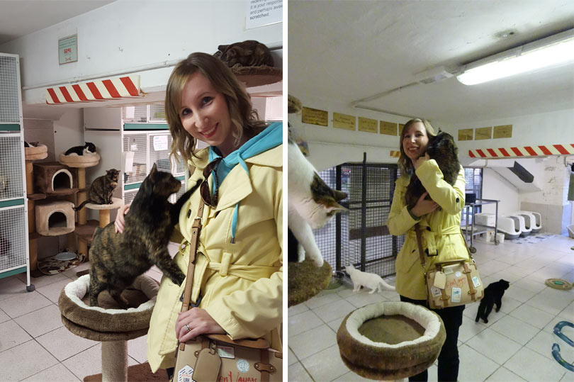 Visiting the Torre Argentina Cat Sanctuary in Rome