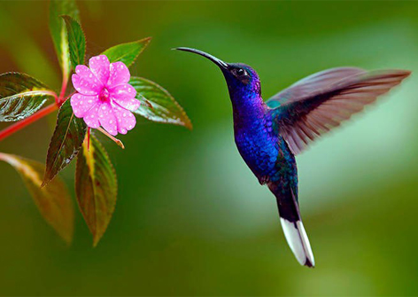 Mindo Birdwatching - Travel Ecuador | Quirutoa