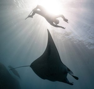Diving in the Galapagos Islands | Quirutoa