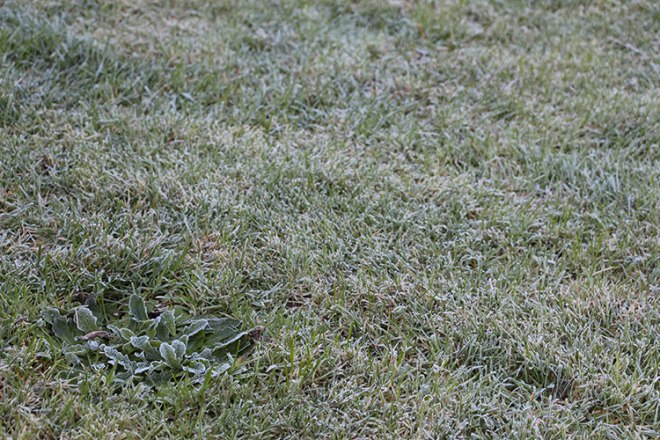 Frost on the grass.
