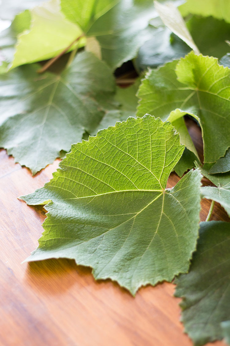 Grape vine leaves, picked and ready to be prepared to make rice and lentil dolma.