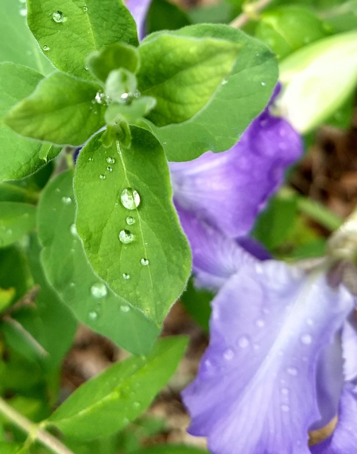leaf gems