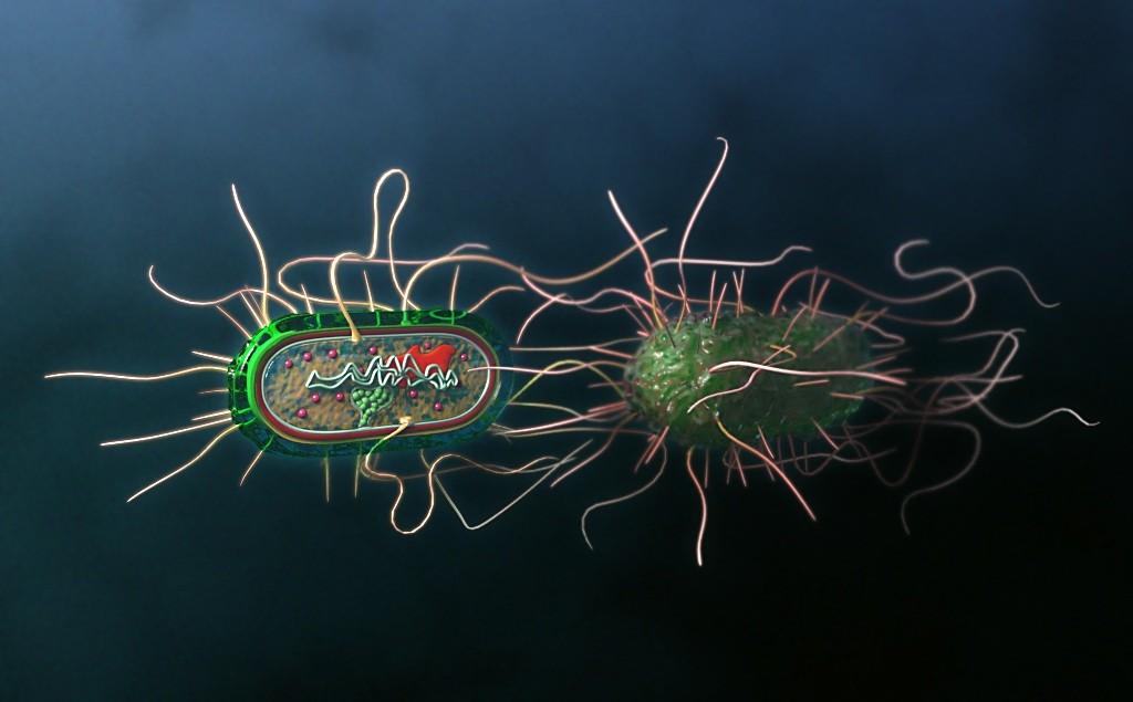 """Las bacterias se """"defienden"""""""