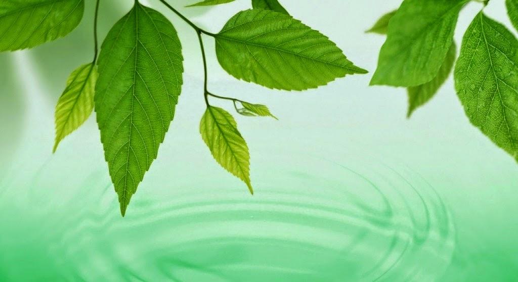 ¿Las plantas se defienden?